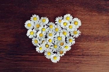 image of white daisies arranged into the shape of a heart on a wooden background
