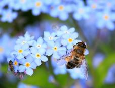 A bee on a blue and yellow flower